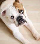 San Jose Short Sales and Short Sale Pets